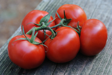 Five ripe red tomatoes on the vine