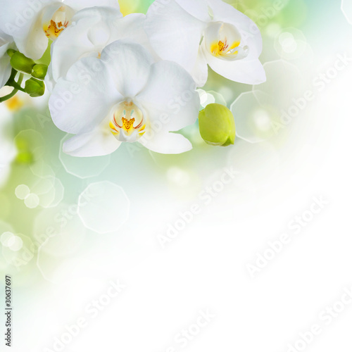 fototapete orchideen wei blume gartenarbeit pixteria. Black Bedroom Furniture Sets. Home Design Ideas
