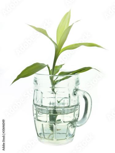Fototapeten,bambu,grün,blüten,gras