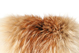 Fox winter fur close-up #2   Isolated