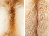 Fox winter fur close-up #3. Neck and back   Textures