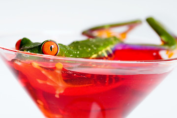 Frog in a Cocktail