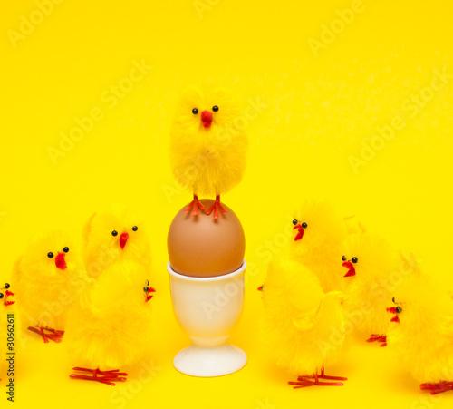 Leinwandbild Motiv Hühnerküken