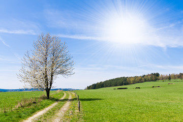 beautiful rural landscape with blue sky