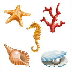 set of marine life