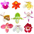 Set of Orchids