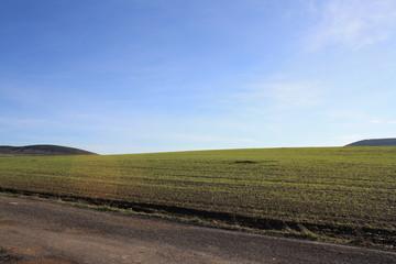 camino y prado