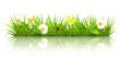 Fototapeten,gras,flora,frühling,sommer