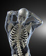 Human Body Medical Scan front view