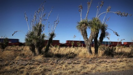 1253 Speeding desert freight train crossing yucca cactus loop