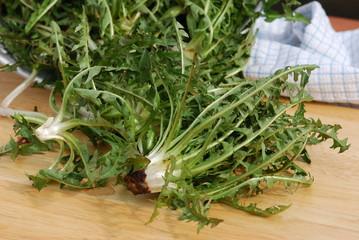 Zubereitung Löwenzahnsalat (Taraxacum)Heilpflanze