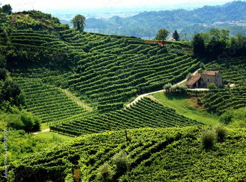 paesaggio collinare con vigne di prosecco