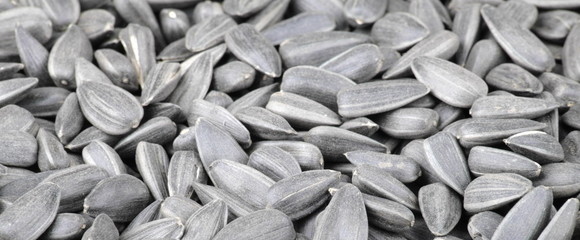 many of sunflower seeds