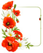 Vector flower frame 8. Poppy and Camomile