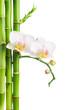 Fototapeten,baum,flora,bambus,spa