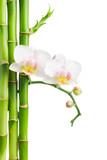 Fototapeta bambus - kurort - Kwiat