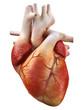 heart - 30731859