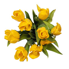 yellow tulips on top isolated. included clipping path.