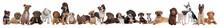 22 psy puppy w wierszu