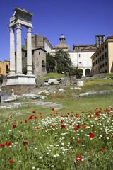 Roma, Teatro di Marcello Marcello ,colonne in stile corinzio,