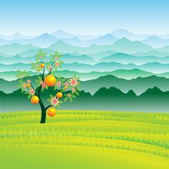 Плодовое дерево