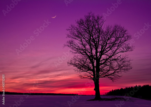 Foto op Canvas Violet sunset in the field