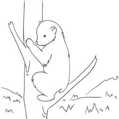 Hand-drawing wild black bear climbs a tree