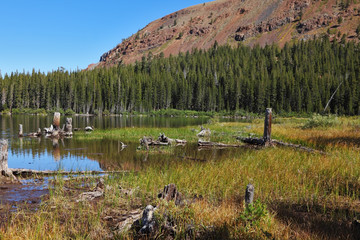 The lake, surrounded by forest and dry stumps