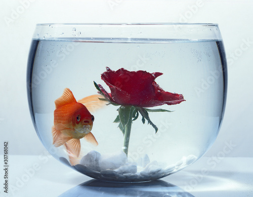 goldfisch im glas von renesebastian lizenzfreies foto. Black Bedroom Furniture Sets. Home Design Ideas