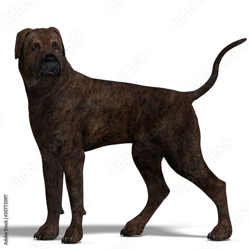 American Mastiff Dog. 3D rendering with clipping path and