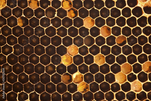 Stingless Honey Bee Hive