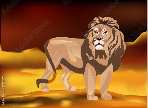 Fotobehang Overige lion in sand desert illustration