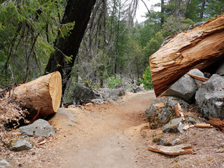 Baum über Weg