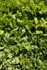 Salat background