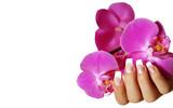 Fototapety Hand mit Orchidee