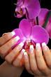 schönes French mit Orchidee
