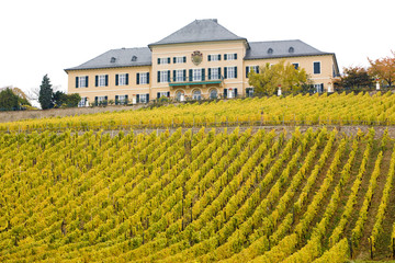 Johannisberg Castle with vineyard, Hessen, Germany