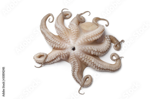 Fototapeta Whole single fresh Octopus upside down