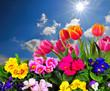Landschaft Wolken Wiese Tulpen