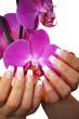 French mit schöner Orchidee