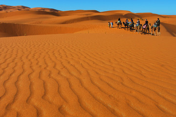 Group of people on camels in the Sahara desert, Morocco