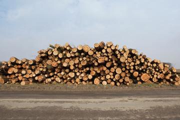 sawn larch logs