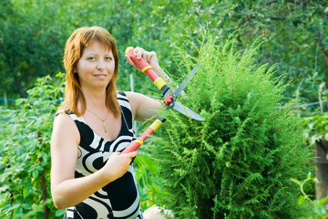 woman cutting  thuja