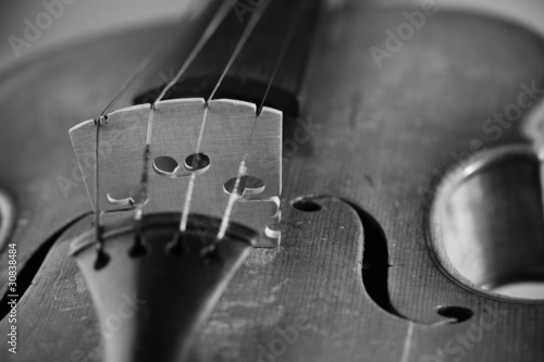 Close up on violin