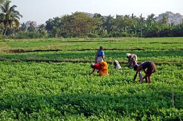 India del sud, donne al lavoro
