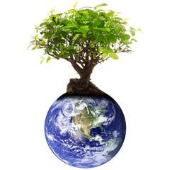 albero sul pianeta terra