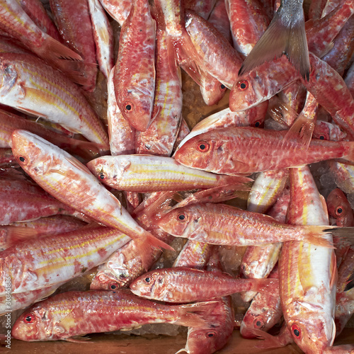 red mullets fish, at the central market