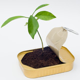 New perspective - seedling from can poster