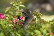 Kenia Africa _  Photo © Herby Meseritsch