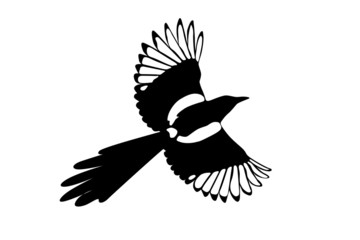 magpie black and white illustration
